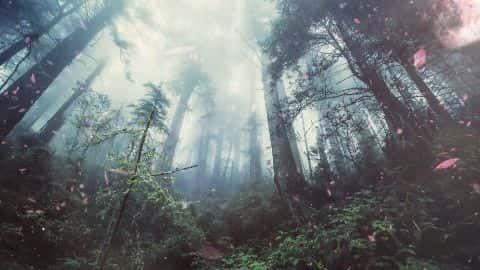 Magical Forest video