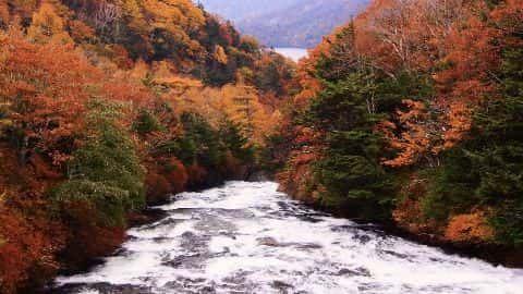 Autumn Spring video