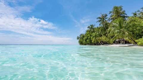 Tamborine Island video